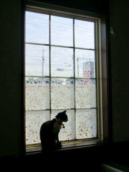 窓際のレミちゃん.jpg